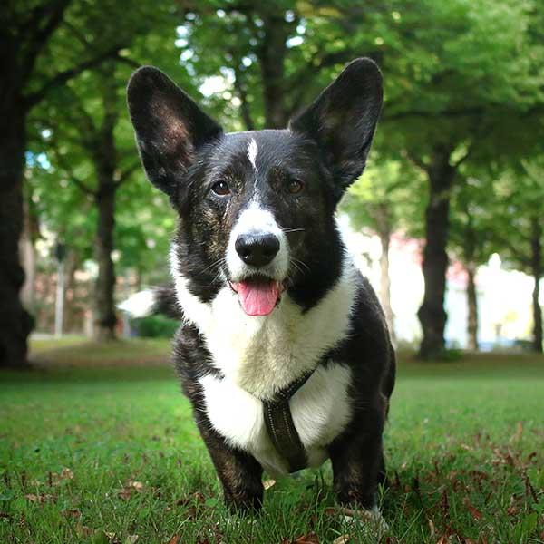 The dog behind Digital Dogsitter